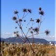 冬の野・・08.12.17