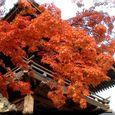 散歩道のお寺の紅葉・・07・12.2