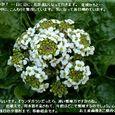 用水路に咲く大草・・07.5.19