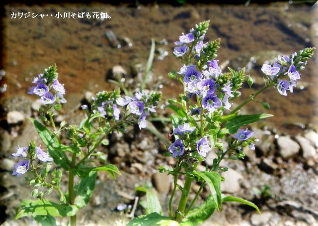 カワジシャ・・2010.4.23