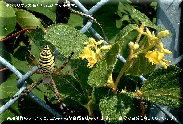 タンキリマメの花・・07.9.3